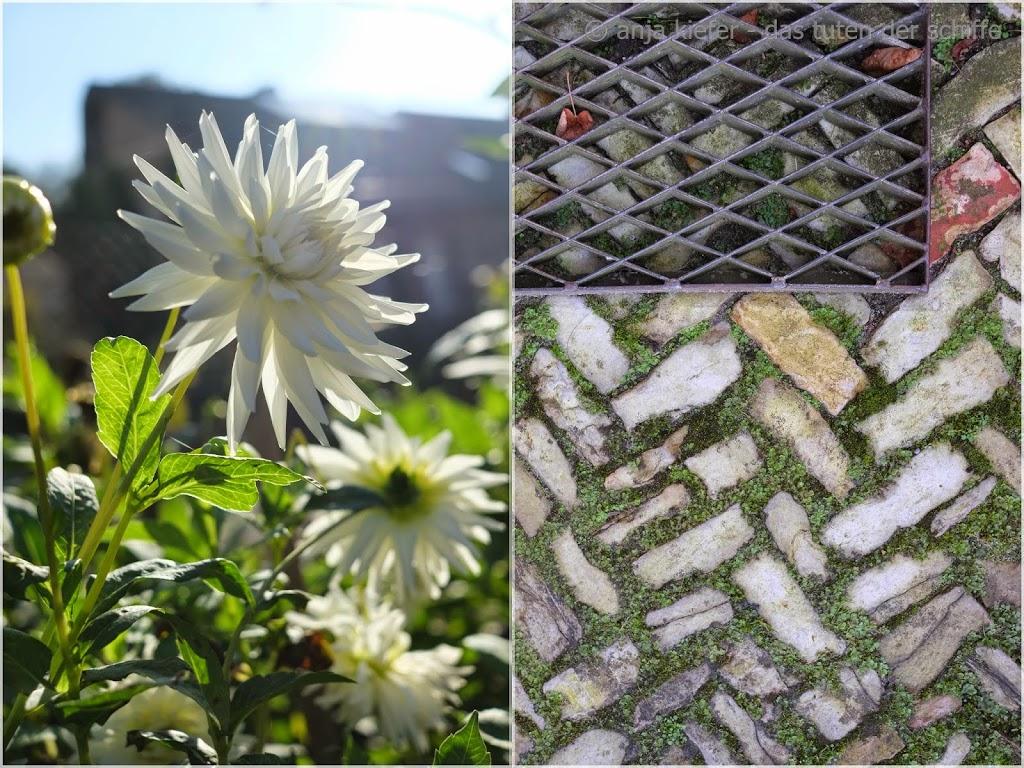 weiße dhalie, natursteinweg, gartengestaltung