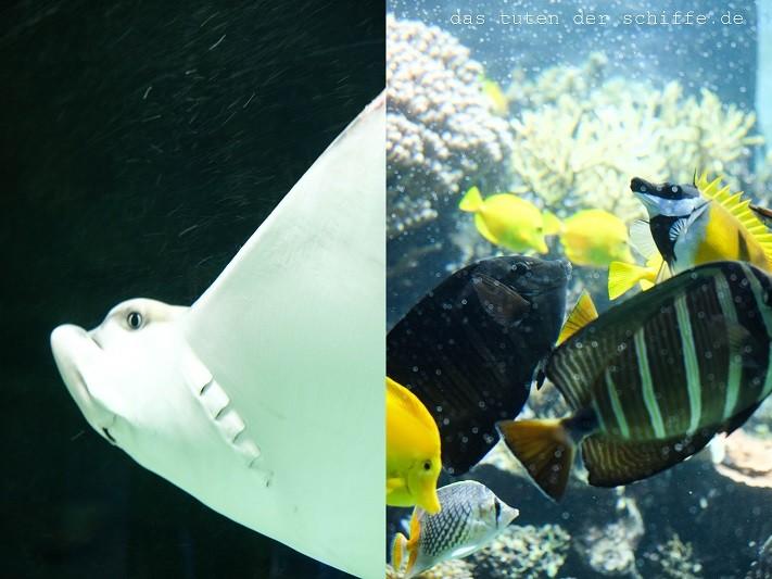 hagenbecks tierpark, hamburg, rochen, meerwasserauarium, korallenriff, aquarium