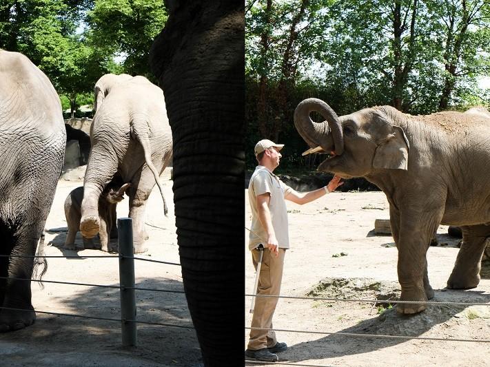 hagenbecks tierpark, hamburg, elefanten