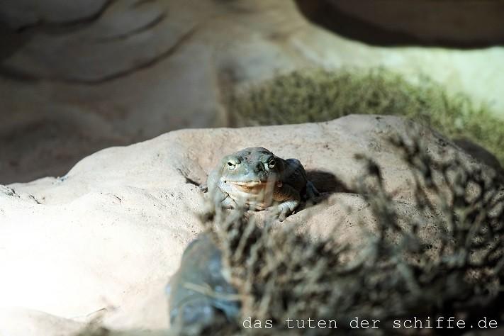 hagenbecks tierpark, hamburg, kröte