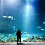hamburger sommernachmittag bei hagenbecks tierpark – mit aquariumsspecial