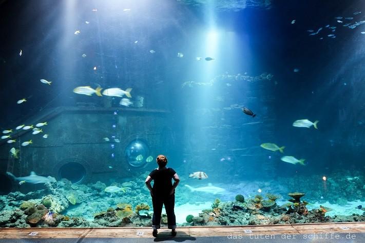 hagenbecks tierpark, hamburg, anja kiefer, das tuten der schiffe, aquarium