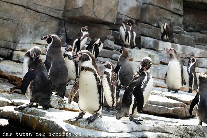 hagenbecks tierpark, hamburg, pinguine