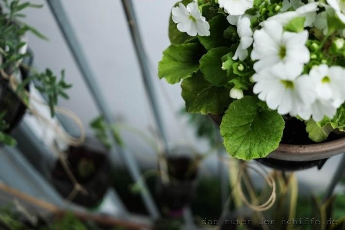 DIY Blumenampel aus Plastikflasche. Hängende Gärten. Balkongestaltung.