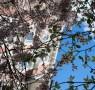 spaziergang zur elbe in hamburg,arnoldstraße, ottensen