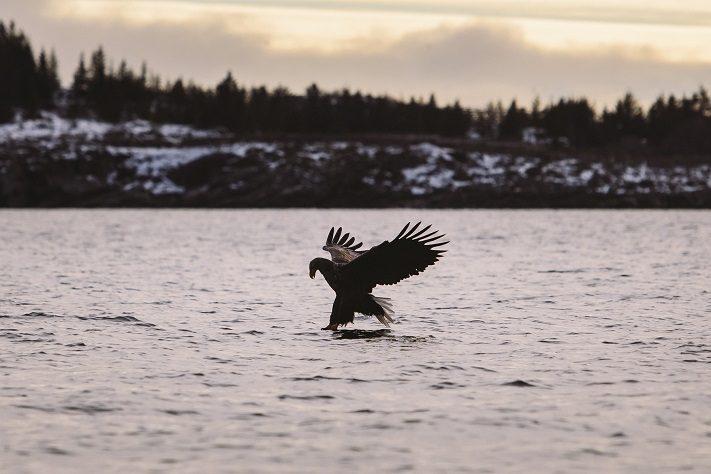 travelblogger- naturerlebnisse auf den lofoten vor norwegen