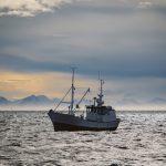 das tuten der schiffe: mission skrei – als travelbloggerin auf den lofoten in norwegen – oder: vor den lofoten auf booten (1)