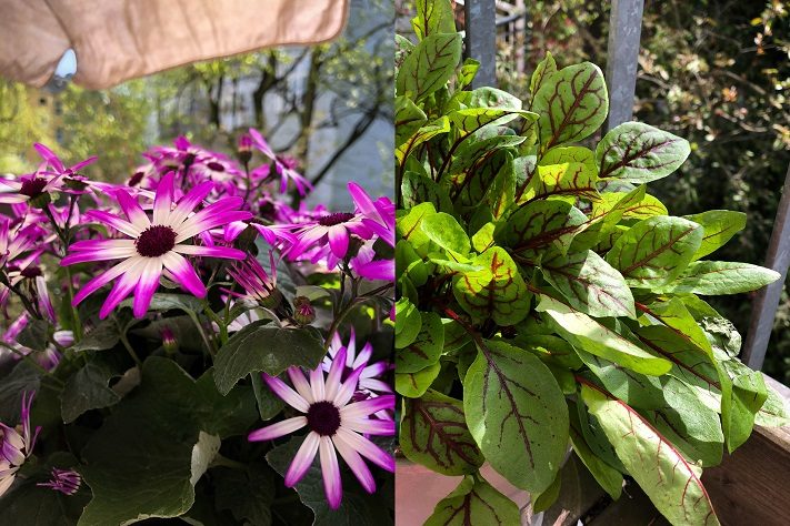 balkonpflanzen für sommersalon